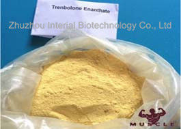China Raw Yellow Crystalline Trenbolone Enanthate Powder , Tren E Steroids For Lean Muscle supplier
