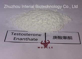 China Bodybuilding Strongest Testosterone Steroid Hormones Test Enanthate Testosterone Enanthate supplier