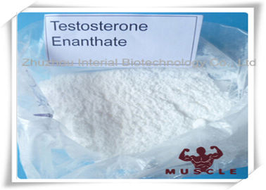 China 99.3% Purity Bulking Steroid Cycle White Powder Testosterone Enanthate For Muscle Building supplier
