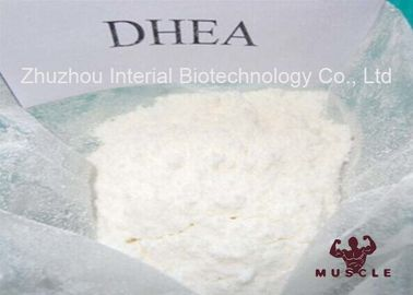 China Pharm Grade Homebrew Steroids Pure DHEA Powder For Gain Strength CAS 481-29-8 factory