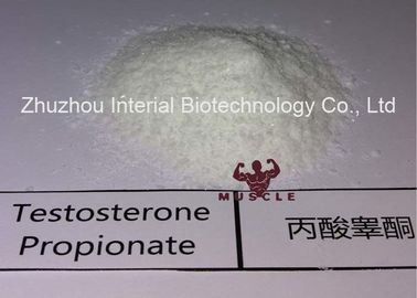 China Strongest Testosterone Steroid Testosterone Propionate Raw Powder Increase Muscle with Safely Shipping distributor