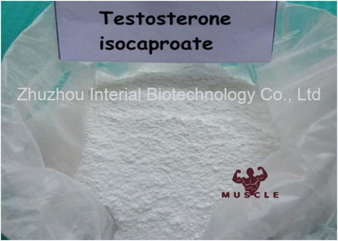 99% Purity Strongest Testosterone Steroid Testosterone Isocaproate CAS: 15262-86-9