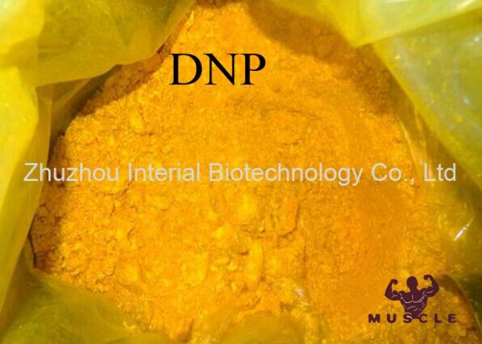 Fat Burning Drug Lose Weight Steroids DNP Powder 2 4-Dinitrophenol CAS 51-28-5